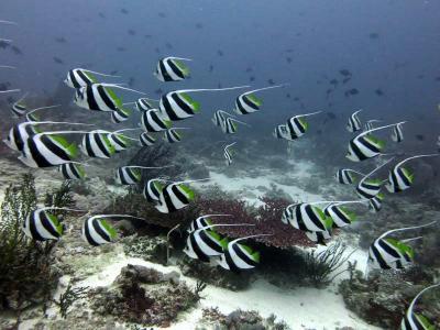 Reserva de Biosfera de Taka Bonerate – Kepulauan Selayar, Indonesia3